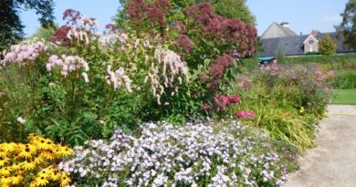 Middelstum - tuin van Ewsum